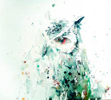 Occhio di gufo by verda83