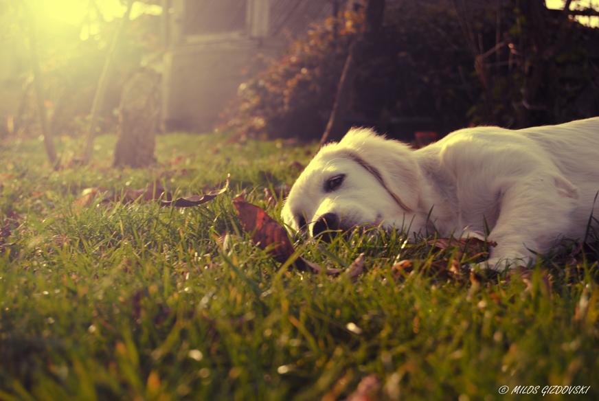 Taking a nap by MilosGizdovski