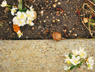 Snail in the Dirt with the Blossoms. by knightno22