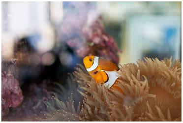 Marlin or Nemo?