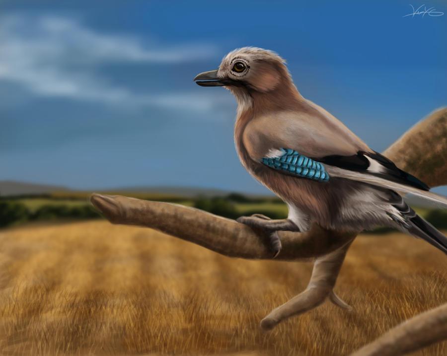 Eurasian Jay by GoldenPhoenix100