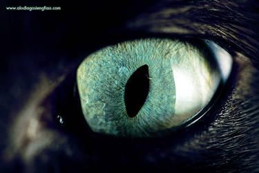 Kitty's Eye by BlackMageAlodia