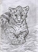 Jaguar Cub by Salvathi