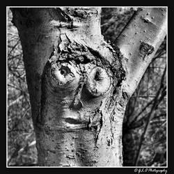 My Tree Spirit