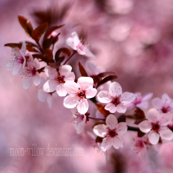 Spring: Pure Pink III by Moon-Willow