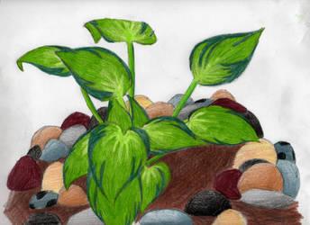 The Backyard Plants by Jestmint