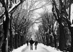 Winter's strangers II