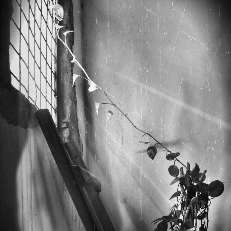 Catch the light by IoaSan