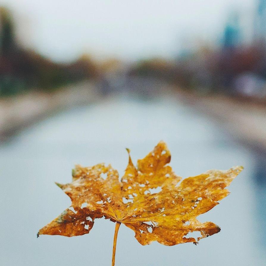 In autumn mood by IoaSan