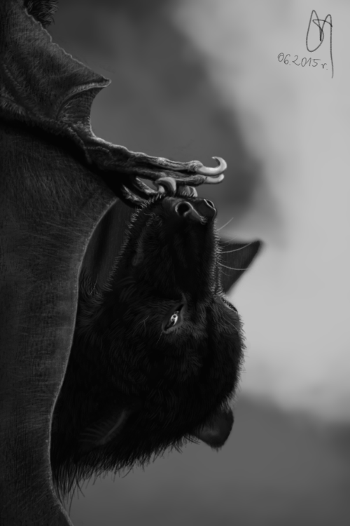 Bat by Dirtyblooded