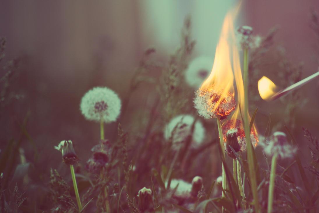 Make a wish by jonathoncomfortreed