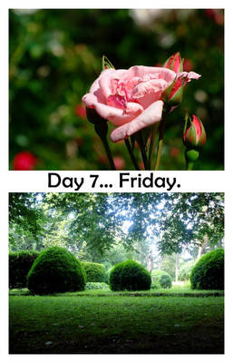 Day 7... Friday