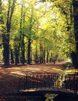 Autumn through my eyes