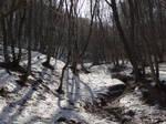 Spring devmeet 2012 - Faget forest by Danutza88
