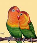Happy valentines day - lovebird