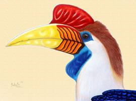 The knobbed hornbill