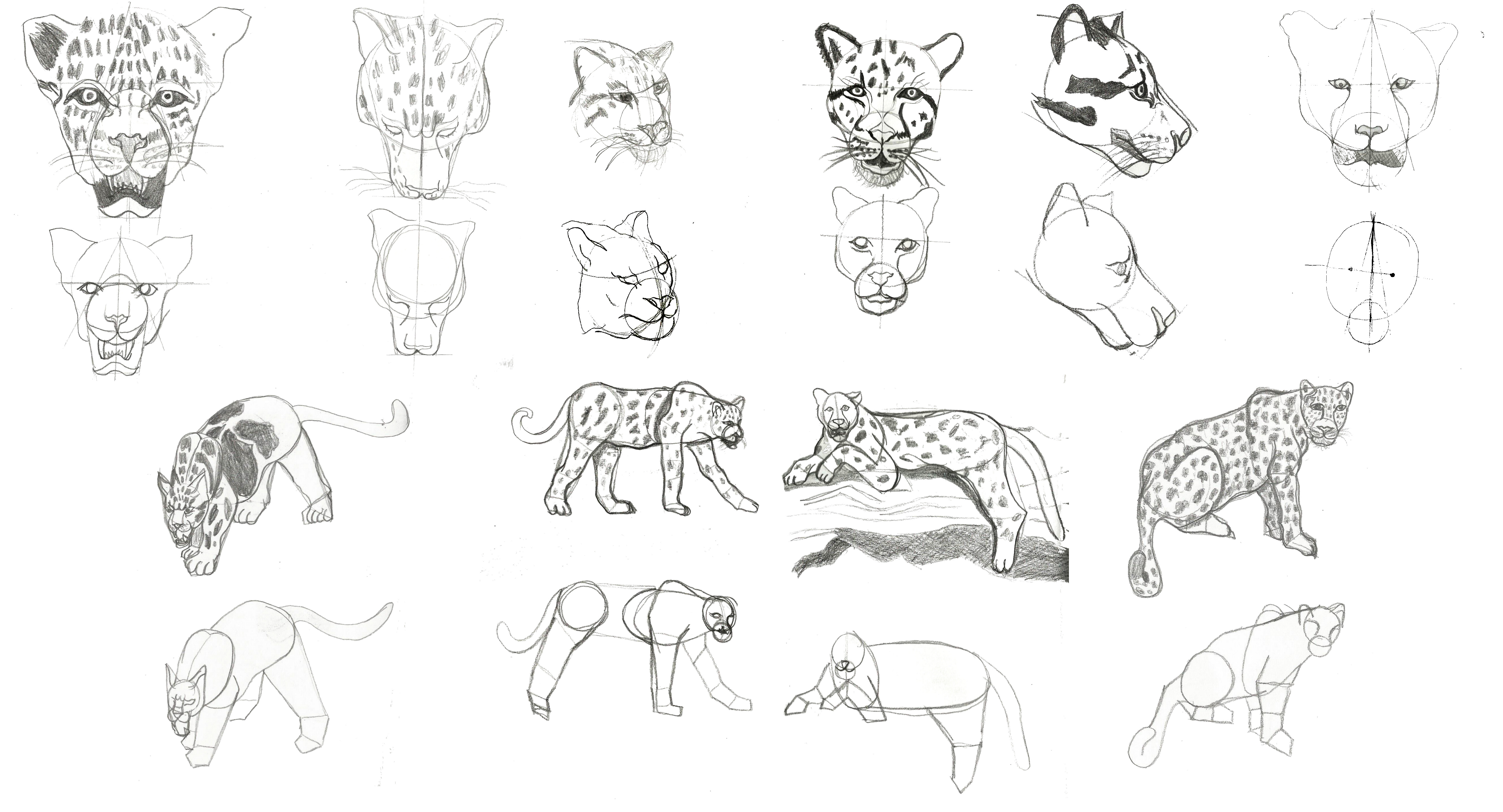 Uncategorized Draw Cheetah how to draw a cheetah leopard and lion by sly 2 on deviantart 2