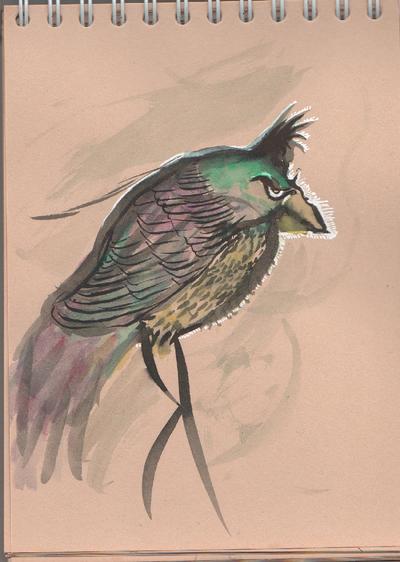 Bird by Utrilus