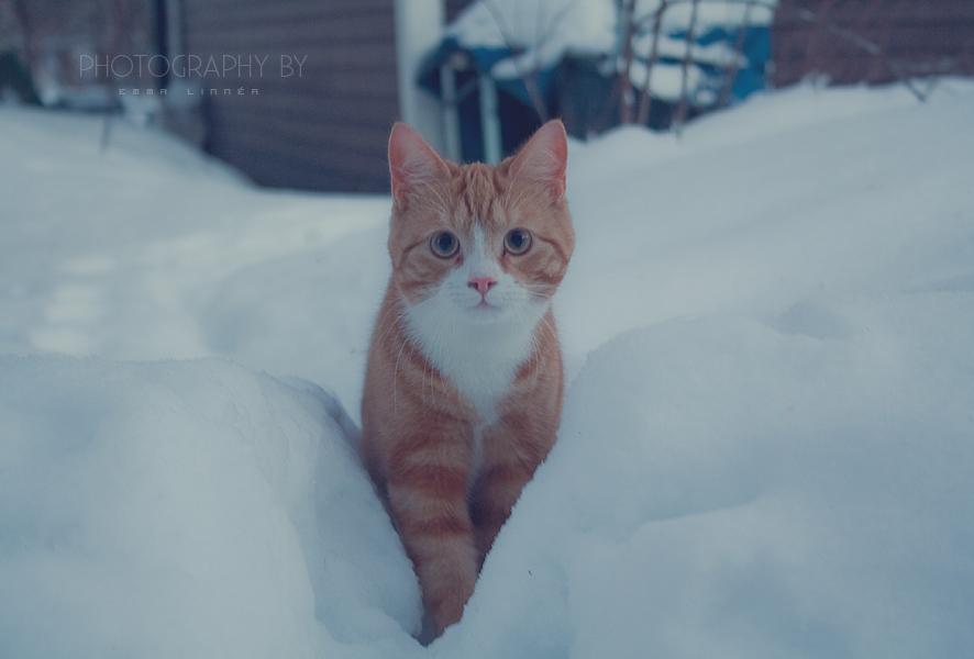 4/365 - new furry friend by frankenteen
