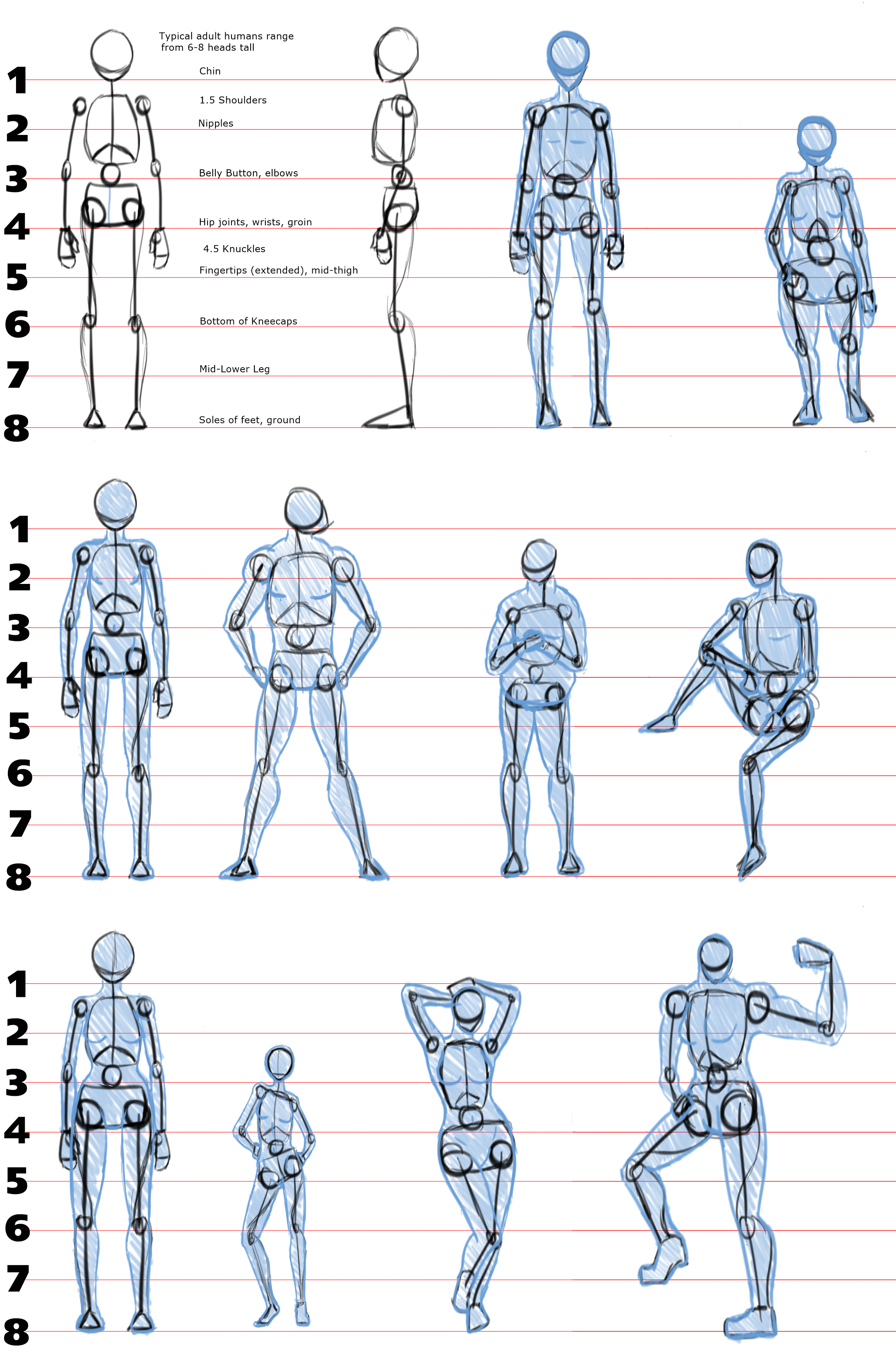 Saturday = Study Day: Human Proportions by HexKor on ...