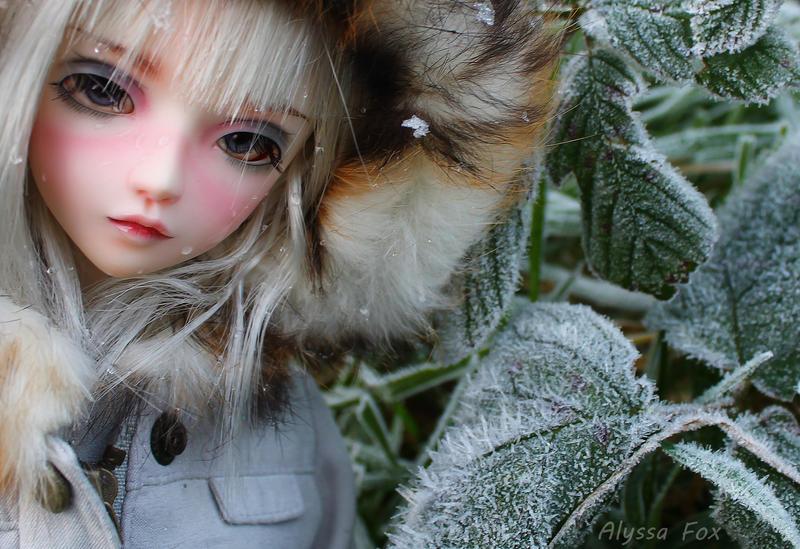 Frosty morning by Alyssa-Fox