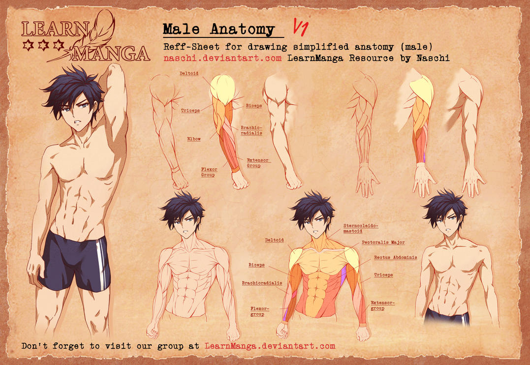 Learn Manga Male Anatomy V1 by Naschi on DeviantArt