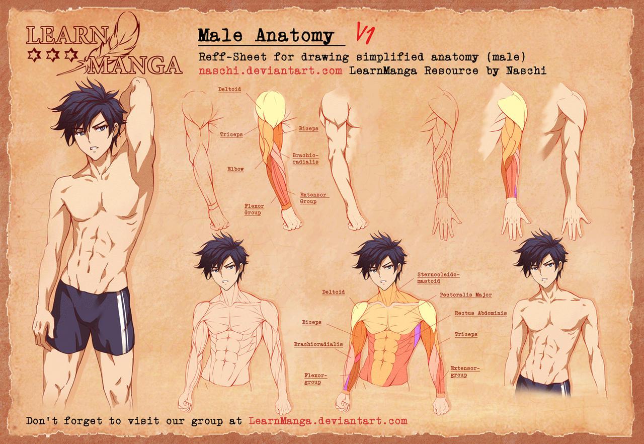 Learn Manga Male Anatomy V1 by Naschi
