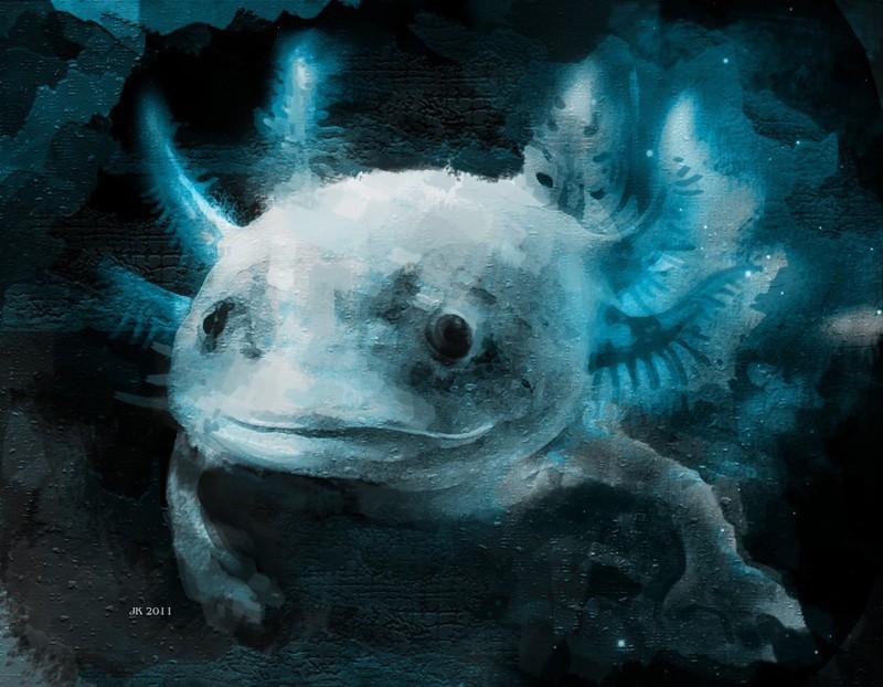 Axolotl Wallpaper | www.imgkid.com - The Image Kid Has It!
