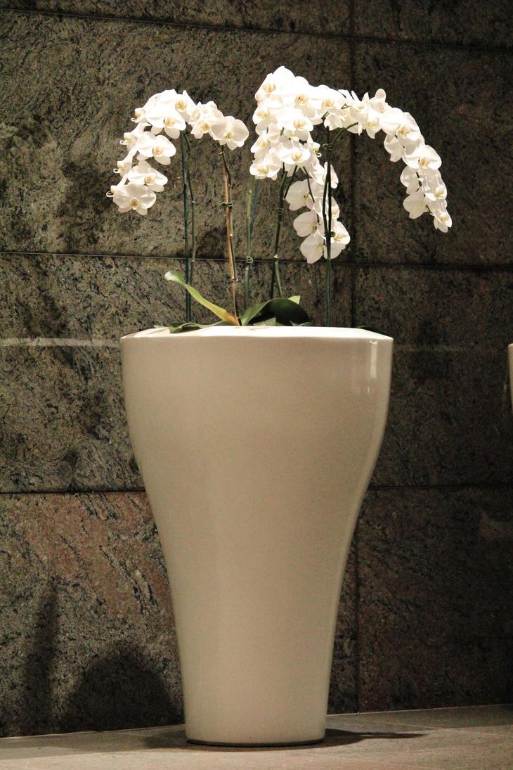 Orchidee by lilluvlyan9el