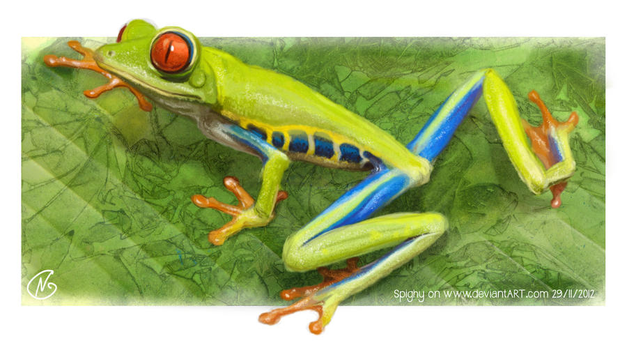 Red eyed poison frog by Spighy
