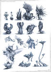 School project_plants study_Reign of Zima