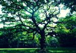 Heart Tree #1 by P1x1eDu5t