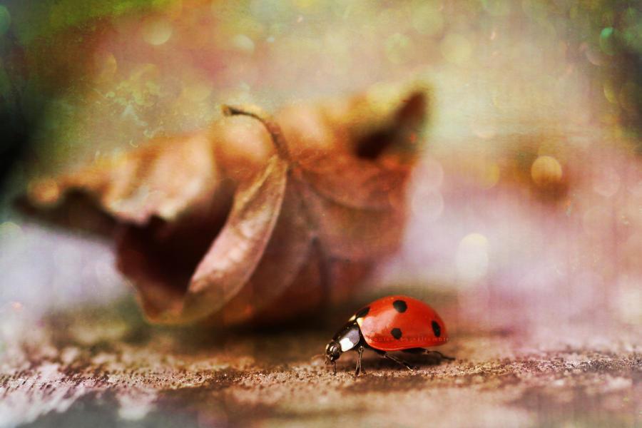 Ladybug by bubblenubbins