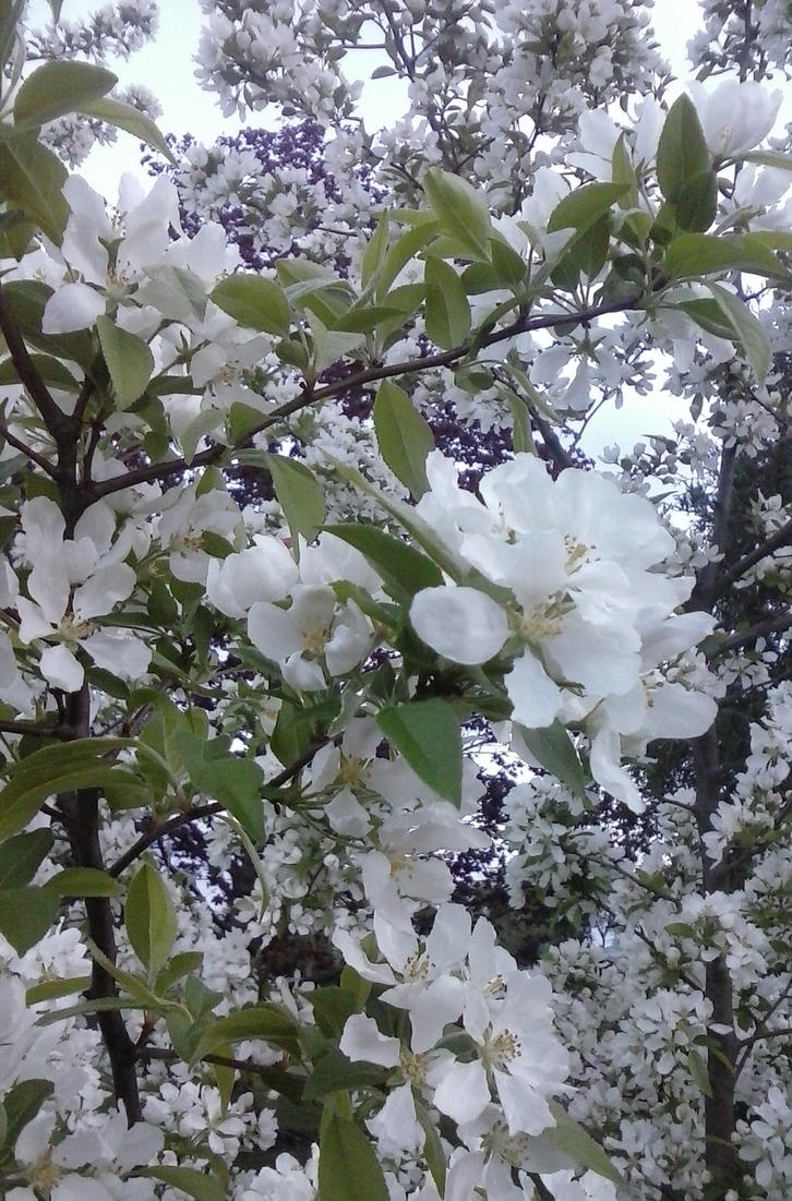 Crab Apple Tree By Eclipseyunatiger On Deviantart