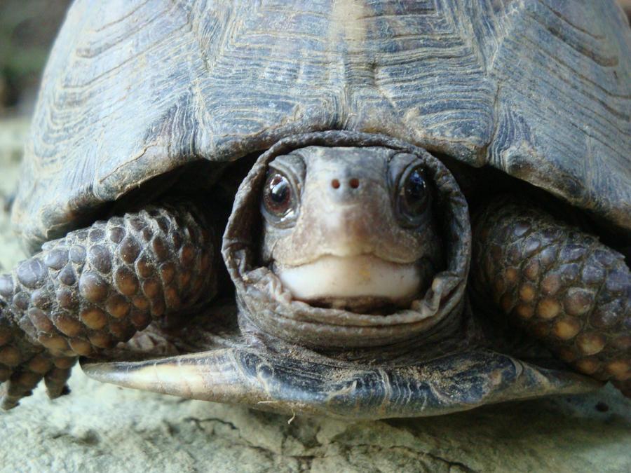 cute turtle by rachet777 on deviantart