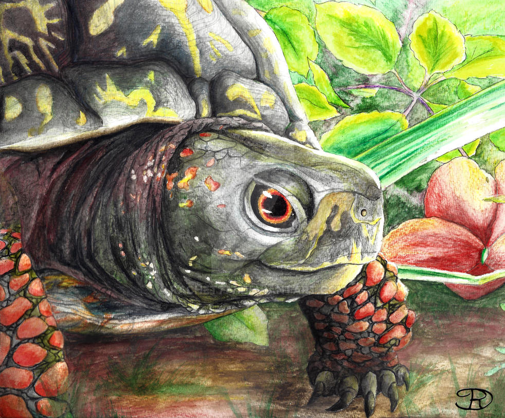 Turtle Painting by Rachet777