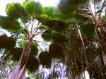 The Underside of Palm Trees by bloomingvinedesign