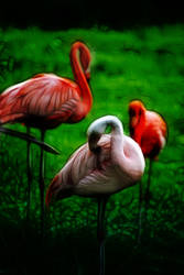 3 Pink Flamingos by bloomingvinedesign