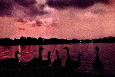 7 Geese At Sunset by bloomingvinedesign