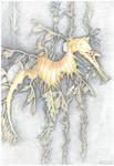 My weedy seadragon