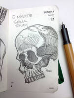 Quick Skull Study by Apoklepz