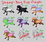 Sheep-Dog Puppy Adopts