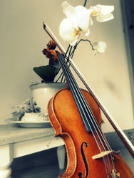 Violin and Orchids by Unipolly