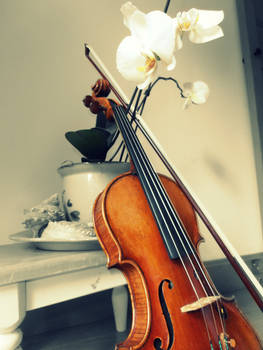 Violin and Orchids