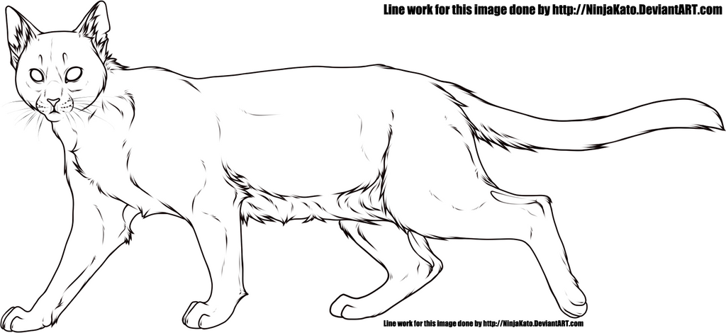 Domestic cat line art by NinjaKato on DeviantArt