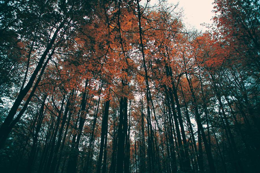 I wander on wood by Cvet04ek