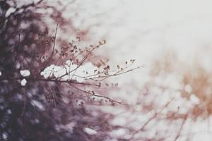 Winter and snow by Cvet04ek