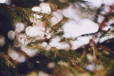 through the trees by Cvet04ek