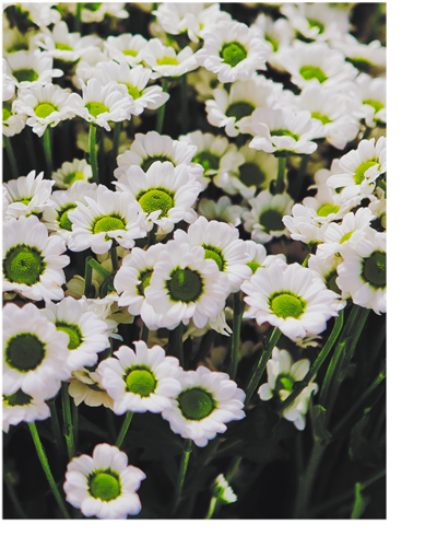 spring by Cvet04ek