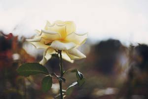 Flowers Trees Plants by Cvet04ek